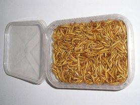 Gevriesdroogde Meelwormen 50 Gram