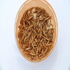 Levende Meelwormen Klein 1 kilo