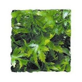 Zoo Med Kunst Planten Large Cannabis 56 cm
