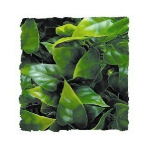 Zoo Med Kunst Planten Small Mexican Phyllo 36 cm